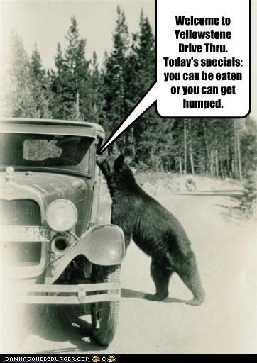 W Welcome to Yellowstone Drive Thru. Today's specials: you can be eaten or you can get humped.