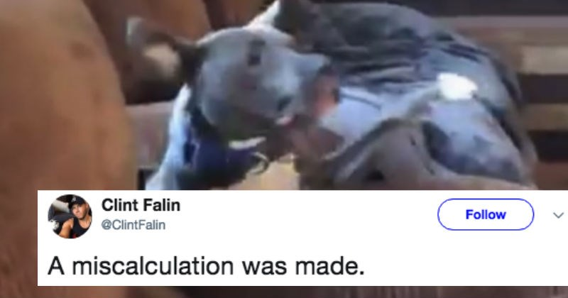 Dog gets trolled by memes after making a hilarious mistake on Twitter.
