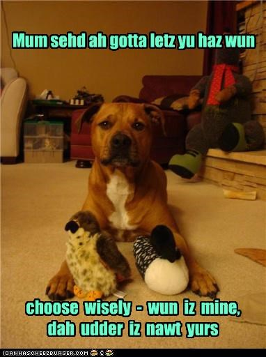 catch 22 choice Command decision forced pit bull pitbull question sharing stuffed animal stuffed animals toys trick