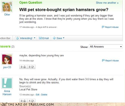 food,Growing,hamsters,pets,shrink,syrian,Yahoo Answer Fails