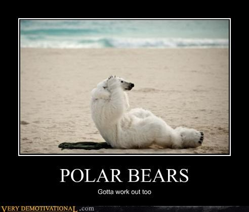 POLAR BEARS Gotta work out too