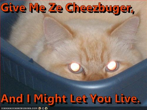 Cheezburger Image 4392495616