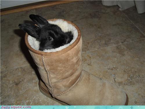 boot,bunny,cute