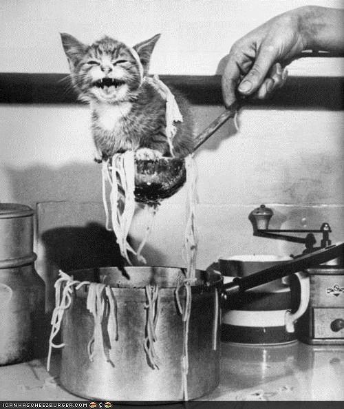 black and white cooking crying cyoot kitteh of teh day kitchen noms noodles spaghetti vintage yelling