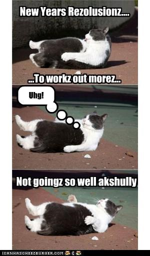 caption captioned Cats exercise FAIL fat happy new year holidays new year new years sit ups working out workout