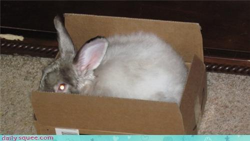 box bunny moose pet reader squees - 4394010368