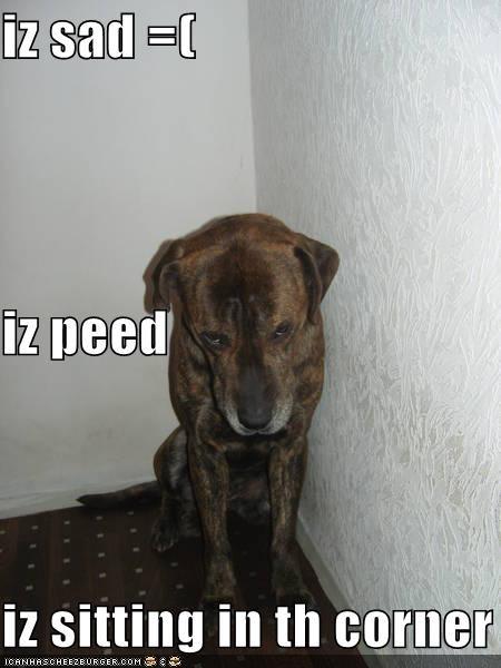 Cheezburger Image 4394259456