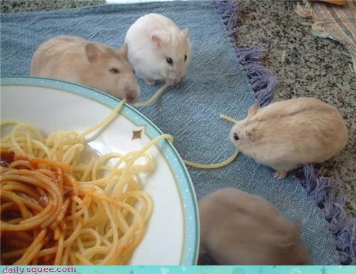 cute eat hamster nom share - 4394537472