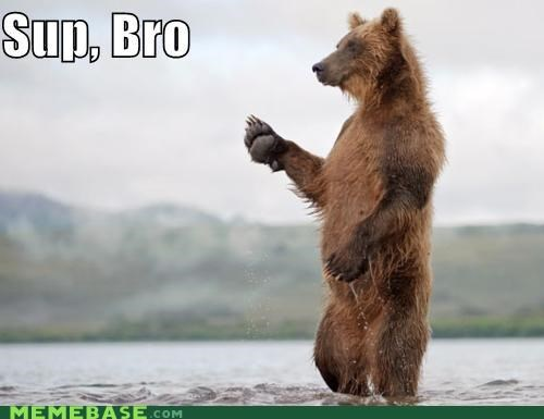 bear,fishing,Memes,sup bro,yo