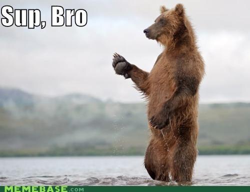 bear fishing Memes sup bro yo - 4394840832
