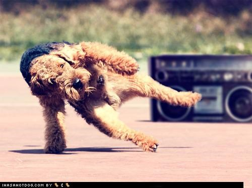 boombox breakdancing dance dancing mixed breed moves Music posing schnauzer talented - 4395032320