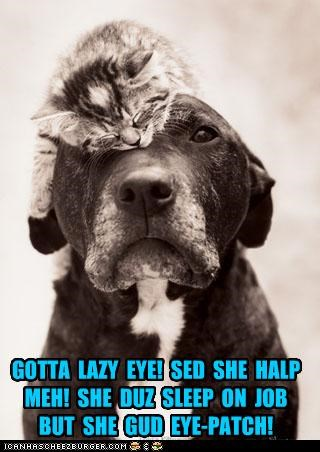 asleep eye eyepatch help kitten lazy lazy eye pun sleeping whatbreed - 4395215616