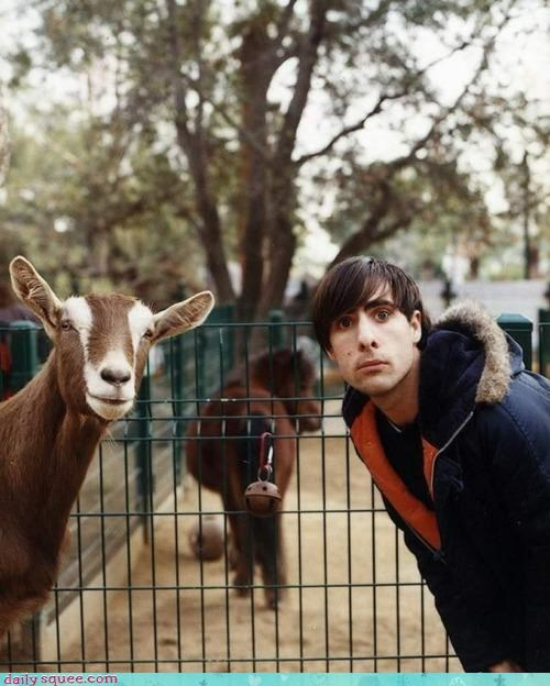 acting like animals,alarmed,best,best ever,Double Take,ever,goat,Jason Schwartzman,looking,shocked,surprised