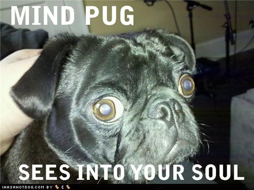 evil eye eye eyes eying mind pug seeing soul Staring Terrifying - 4395399936