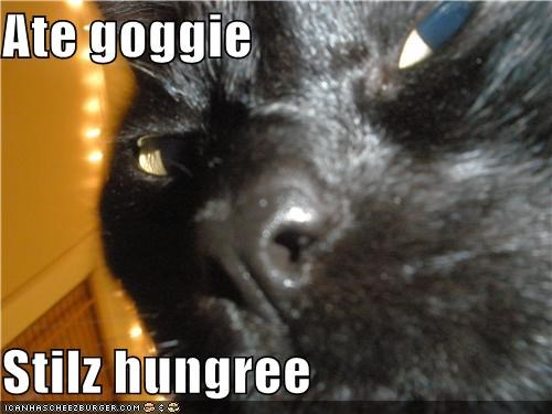 Cheezburger Image 4395416064