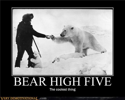 awesome,bear,high five