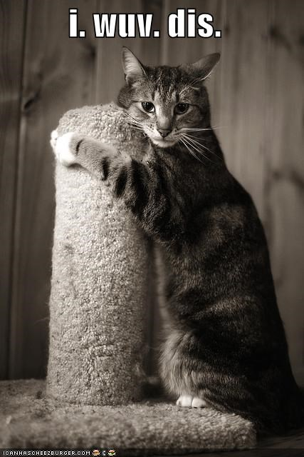 caption,captioned,cat,cuddling,love,post,scratching post,toy