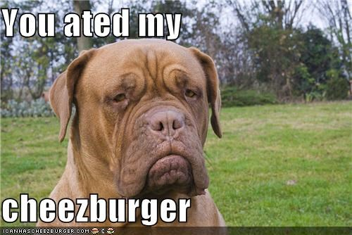 Cheezburger Image 4395869952