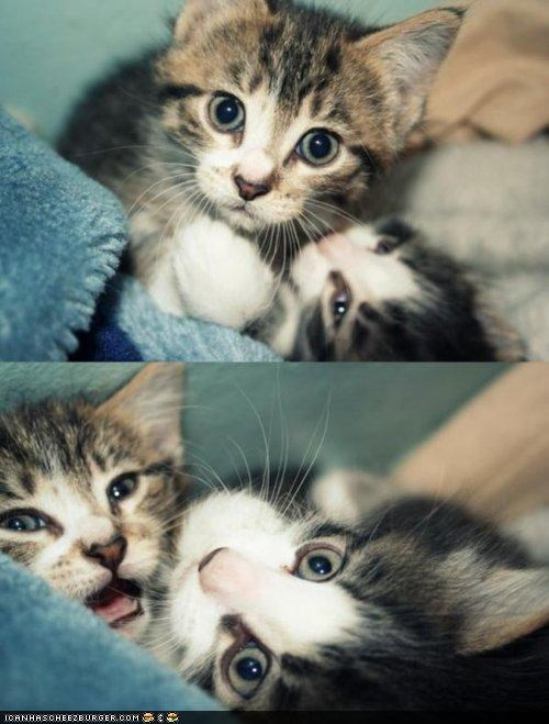 awake cyoot kitteh of teh day grumpy meow multipanel nap sleeping tired two cats - 4395971072