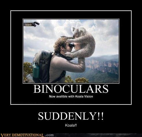 wtf,koala,binoculars