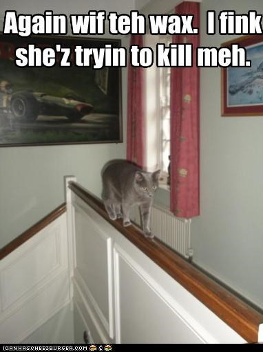 afraid,again,balancing,Banister,caption,captioned,cat,evil,kill,paranoid,plot,railing,stairs,stairway,trying,upset,walking,wax