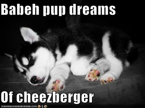 Cheezburger Image 4396294144