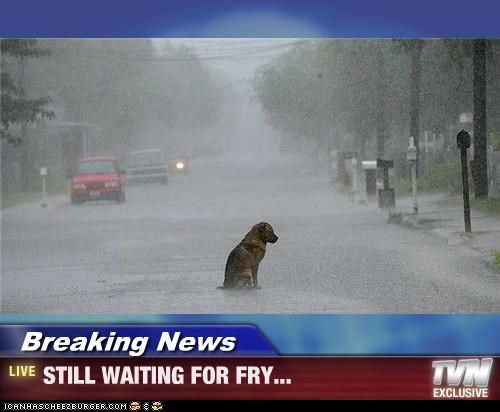 dogs,fry,futurama,rain,Sad