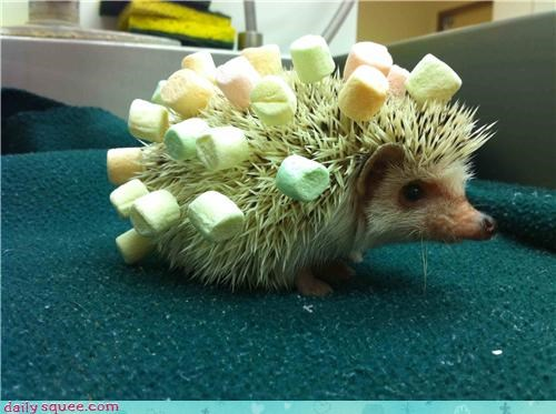decorated food Hall of Fame hedgehog hedgehogs marshmallows spines squee - 4396699648