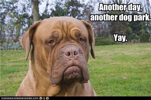 another bull mastiff bullmastiff day dog park excited happy hyperbole park sarcasm yay - 4396731136