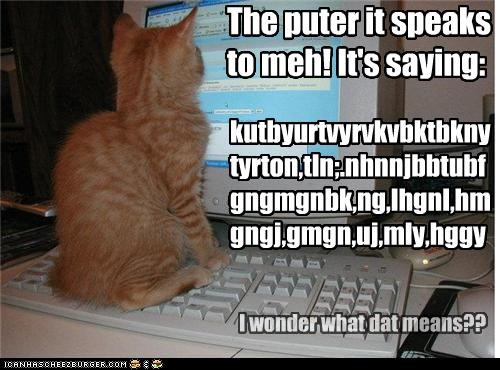 caption captioned cat communicating communication computer confused jargon keyboard kitten meaning sitting speaking speaks Staring tabby wondering - 4397020416
