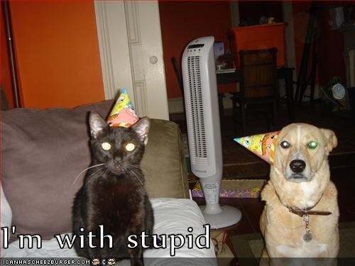cat hat hats im Party party hat pointing stupid whatbreed with