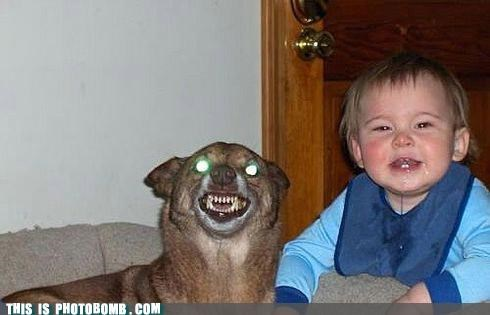 animals,Babies,demons,dogs,jk,lol,photobomb