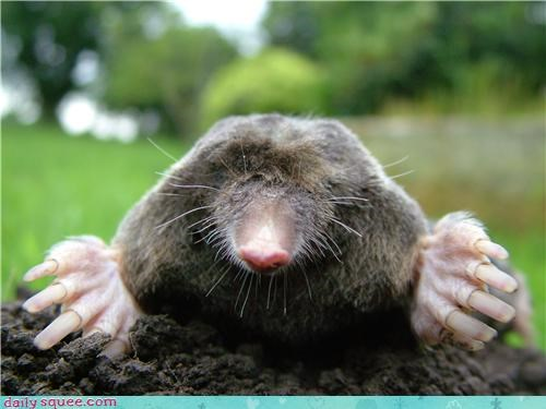 Blind As A Mole Daily Squee Cute Animals Cute Baby Animals