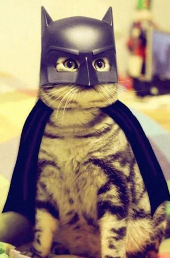 a funny list of cats in capes