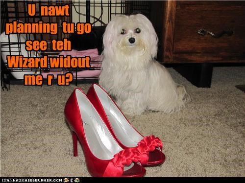 caught,checking,crime,go,going,havanese,heels,indignant,question,ruby slippers,seeing,shoes,slippers,the wizard of oz,toto,upset,wizard