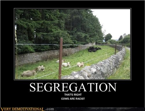 animals cows racist segregation sheep - 4398907136