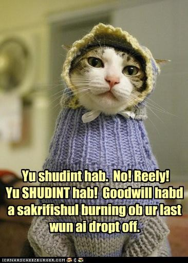 bad,caption,captioned,cat,clothing,costume,do not want,dressed up,goodwill,insisting,really,repulsed,shouldnt,you-shouldnt-have