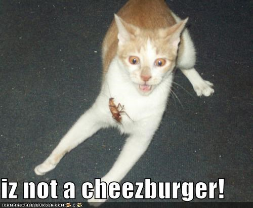 Cheezburger Image 4399225856
