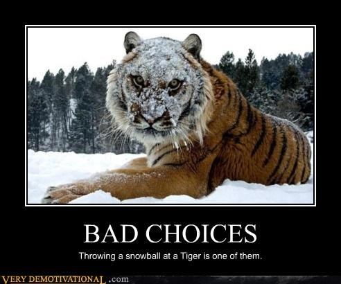 bad choice snowball tiger