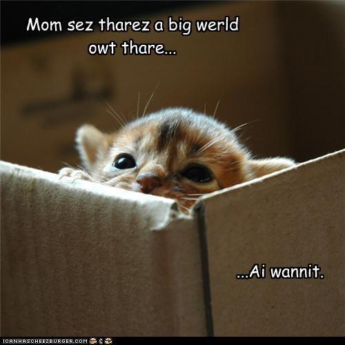 Mom sez tharez a big werld owt thare... ...Ai wannit.