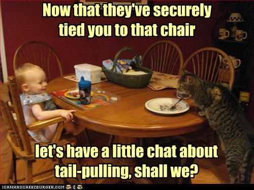 angry baby caption captioned cat chair chat hypothetical interrogating interrogation pulling question restraint secured tail tied toddler - 4400156928
