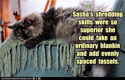 addition blanket calico caption captioned cat claws shredding skills superior talent tassels - 4401465856