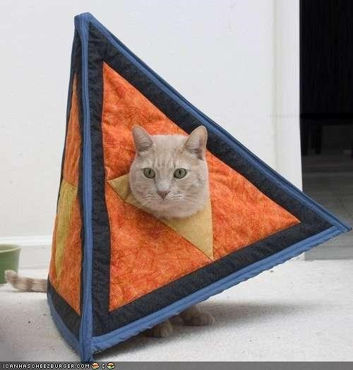 cat,costume,cute,dressed up,four-sided,funny,instructions,math,nerdy,outfit,tetrahedron