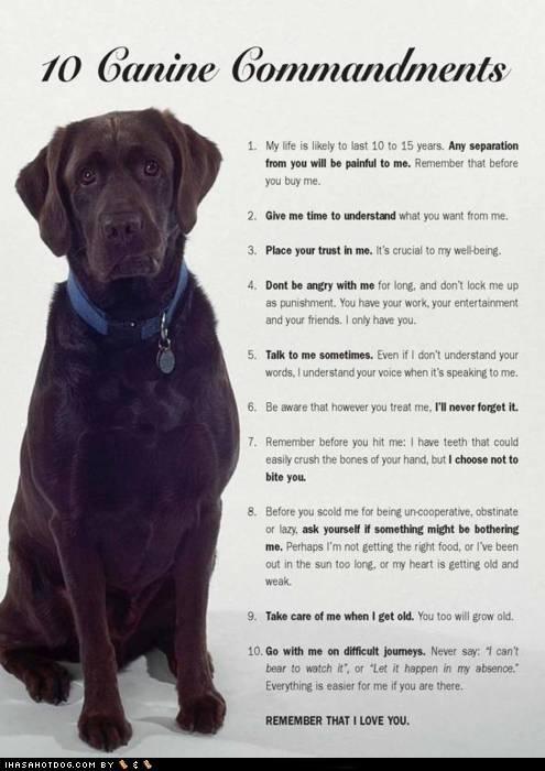 10 advice commandments dogs information labrador ten - 4401688320