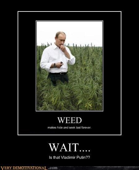 drugs Vladimir Putin weed wtf - 4401758720