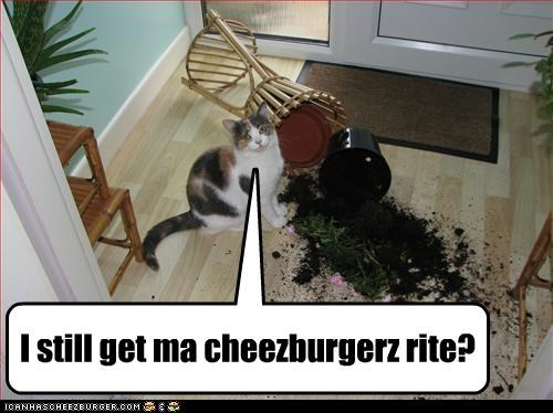 Cheezburger Image 4401774592