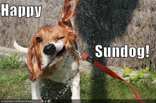 beagle happy happy sundog shakeface shaking Sundog water wet - 4401900032
