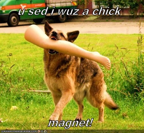 Cheezburger Image 4402021376