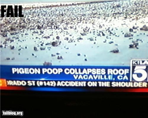 birds,caption,failboat,g rated,gross,news,poop,roof