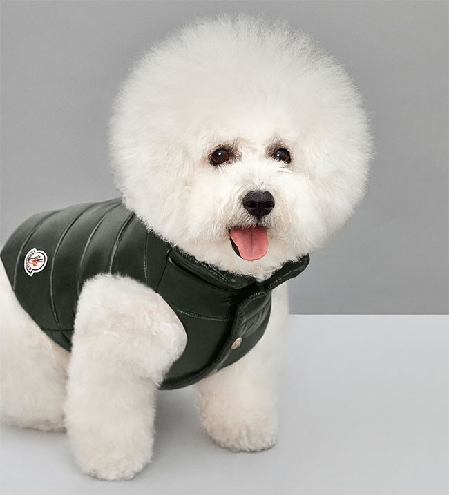 dogs puppy funny - 4402181